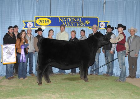 Mason Walker Reserve Champion Limousin NWSS