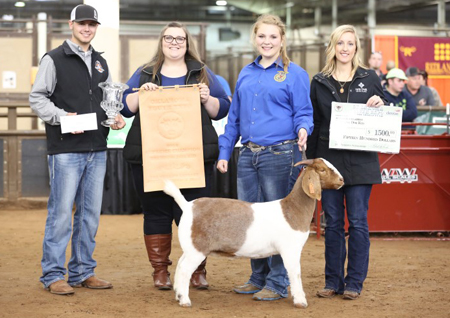 Sure Champ Grand Champion Doe OYE