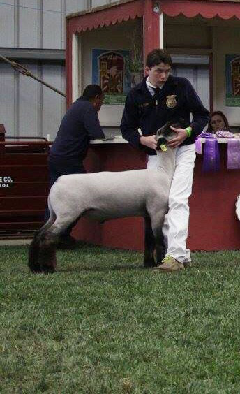 Reserve Mkt Lamb-Salinas Valley Fair – Jacob Madden