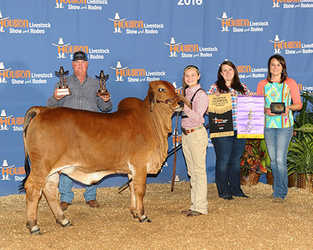 Reserve Red Brahman-Houston-Callie Welty