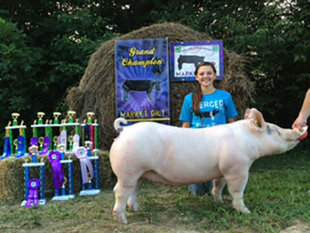Lexus_Mercer 2015 Grand Champion Market Gilt