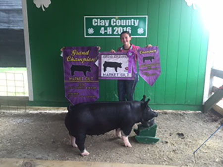 Lexus_Mercer_2016  Grand Champion Market Gilt