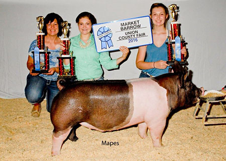 savannah walls_grand_champion_barrow