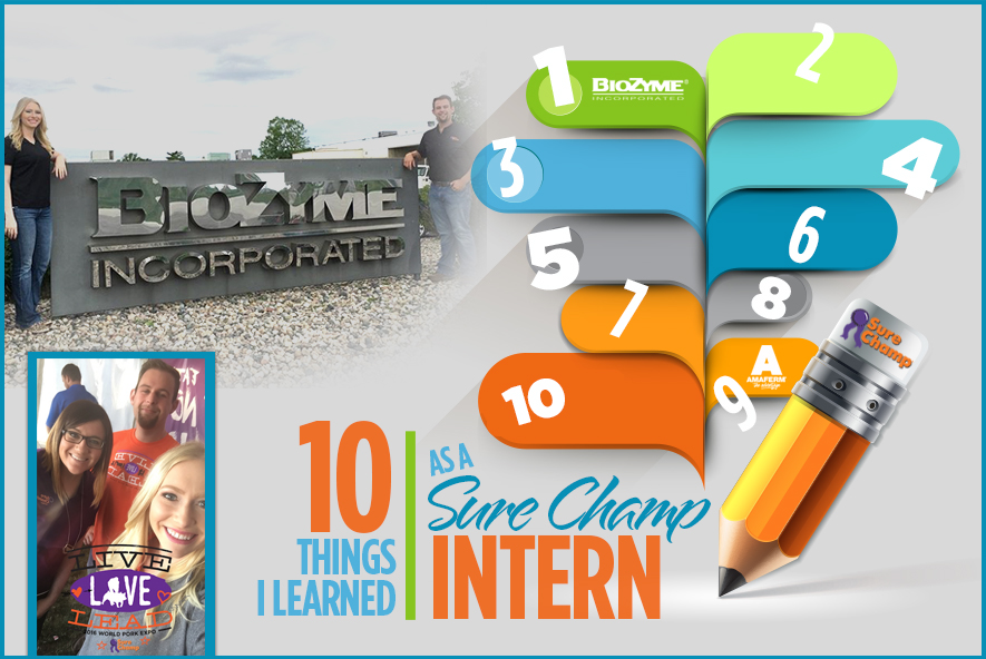 surechamp-intern-featured-aug2016