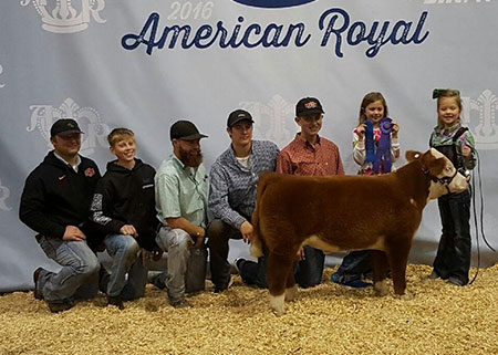 16-grandminiaturehereford-americanroyal-delanietroyer