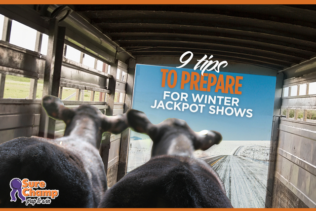Tips For Winter Jackpot Shows