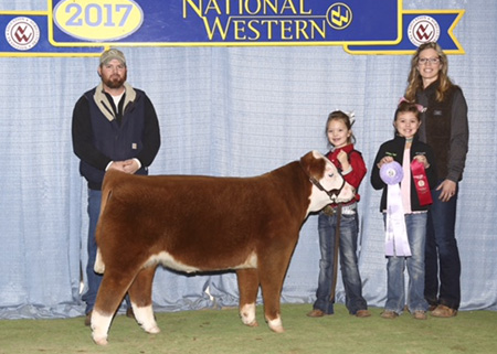 Sure Champ: Reserve Grand Champion Miniature Hereford Steer - Delanie Troyer