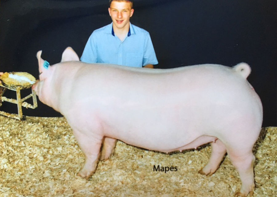 16-Res-Champ-York-Gilt-Gilt-WV-State-Fair-Ryan-Borer