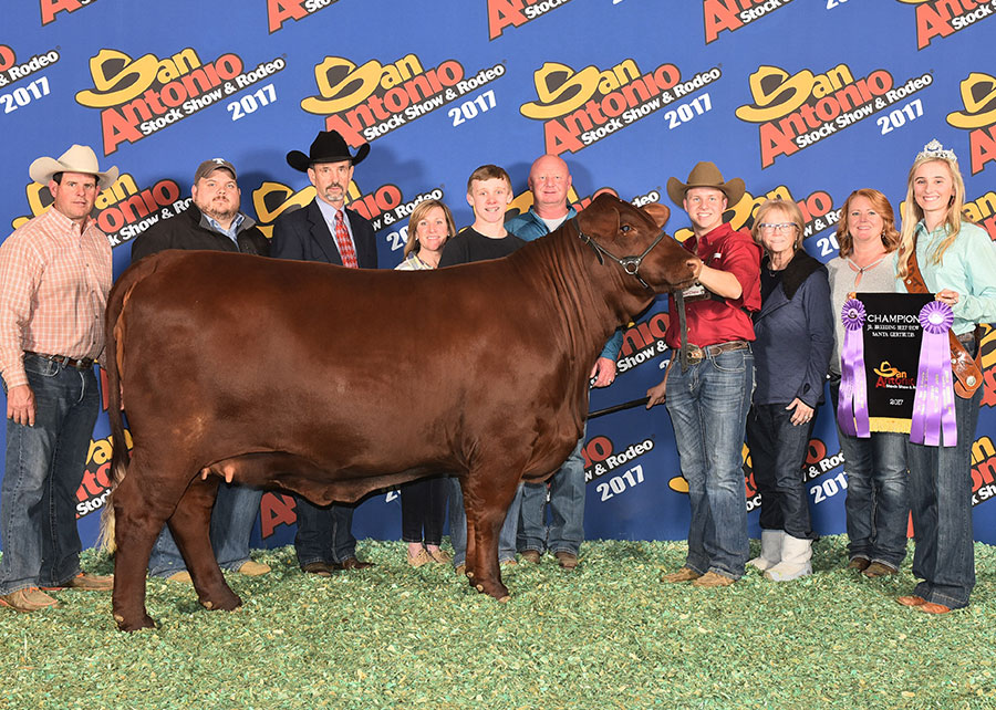 17Champion-Junior-Santa-Gertrudis-Breeding-Heifer-SALE-Pitchford-Family