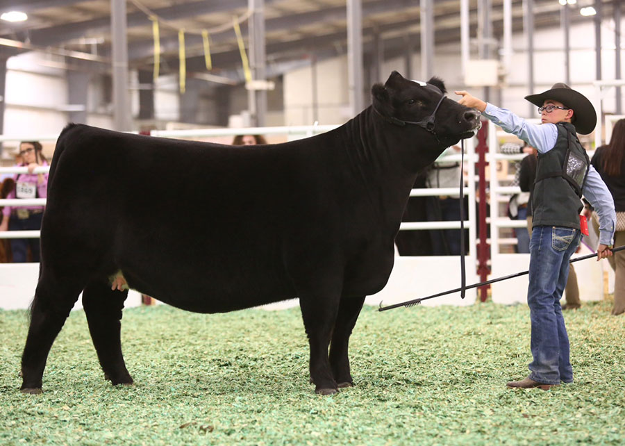 17-Champion-Jr-Breeding-Simmental-Heifer-SALE-Kayden-Tanner