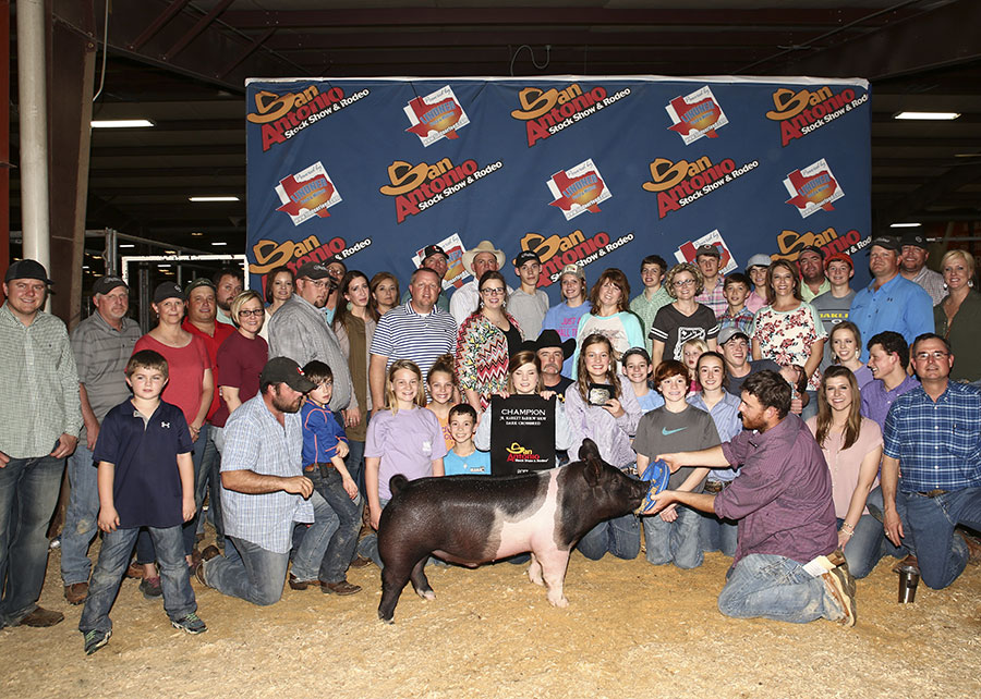 Breed Champion Dark Cross 2017 San Antonio Stock Show Shown by Kaitlyn Blaylock