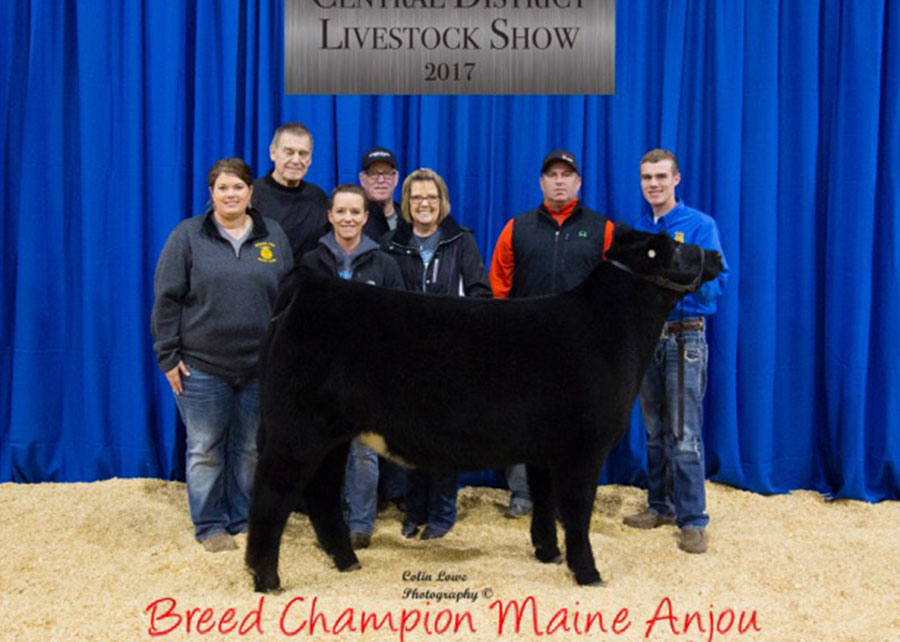 17-breed-champion-maine-anjou-oklahoma-central-district-livestock-show-ethan-attebery