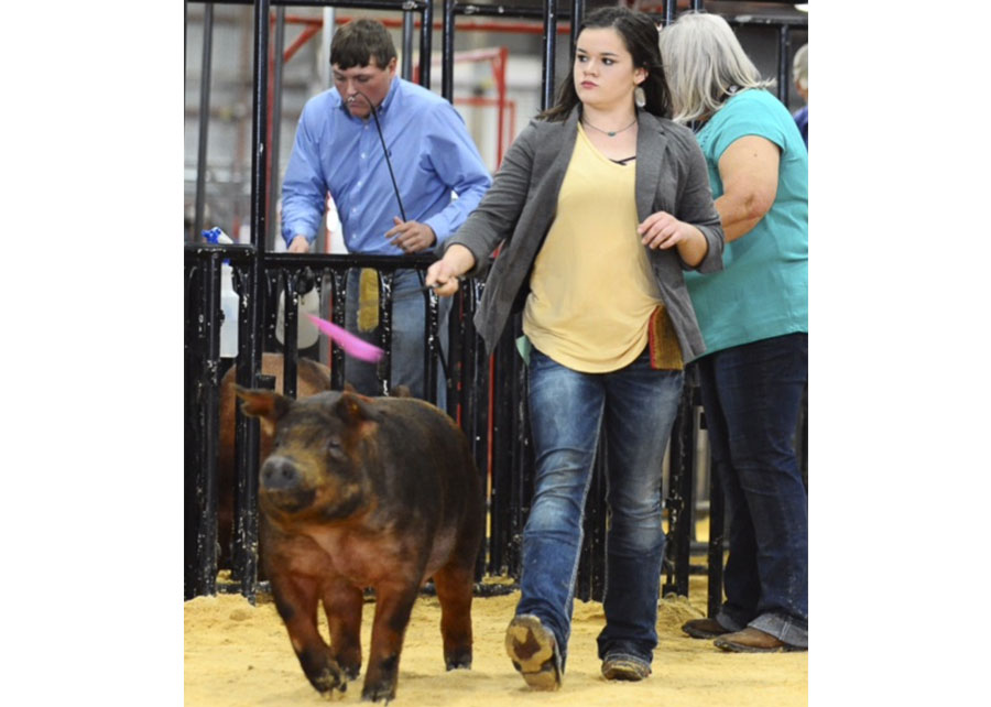 17-champion-duroc-montague-county-fair-jessica-vogel