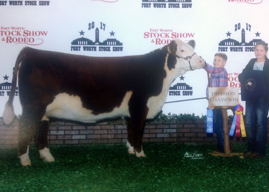 17-polled-hereford-div-champ-fwssr-rendon-campbell