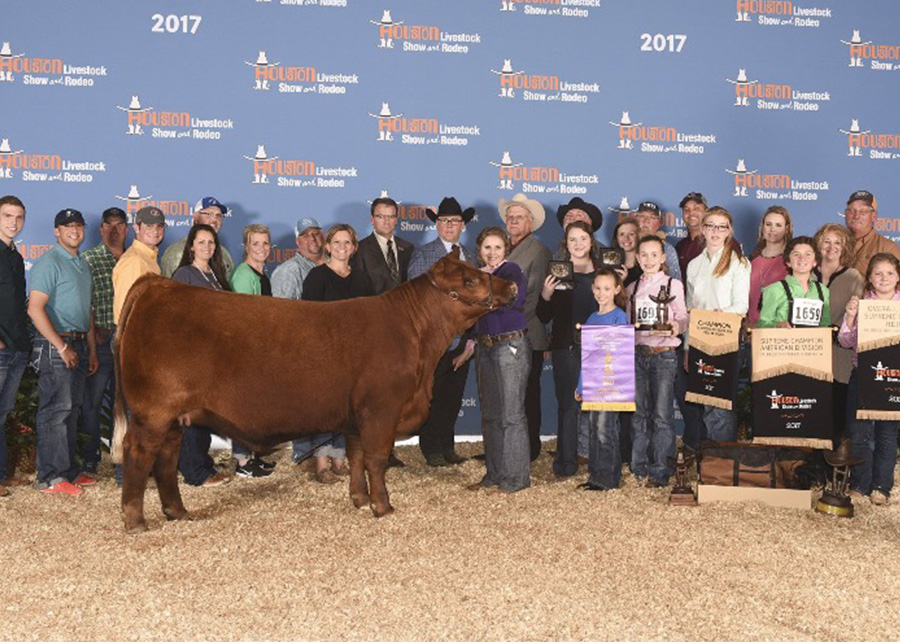Reserve Supreme Champion Heifer2017 Houston Livestock ShowShown by Karagen Dreibrodt