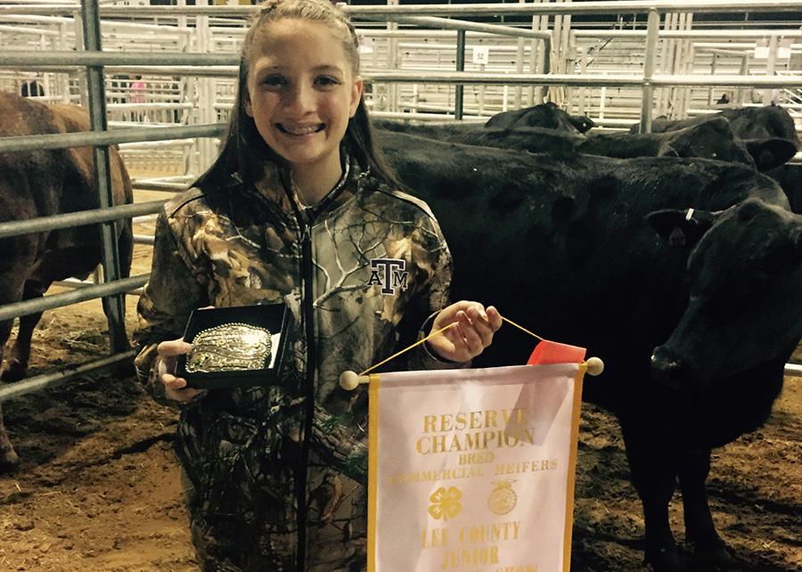 Res Champion Commercial Heifers2017 Lee County Jr Livestock ShowShown by Brianna Lehmann
