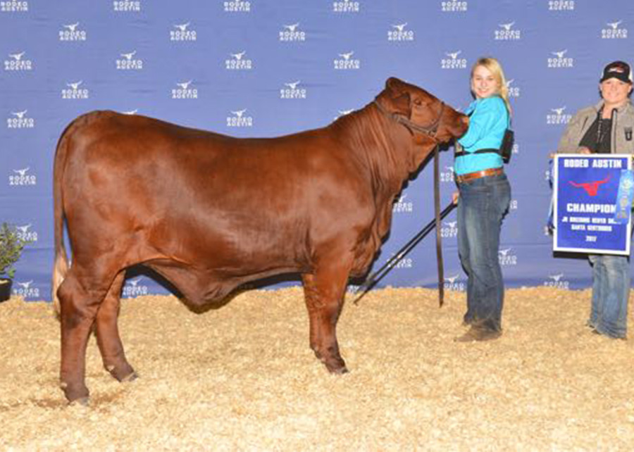 Champion-Santa-Gertrudis-Female-Rodeo-Austin-Shelby-Ferguson