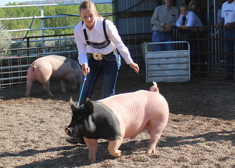 Grand-Champion-Market-Hog-2017-dawson-County-Fair-Kelty-Raciborski