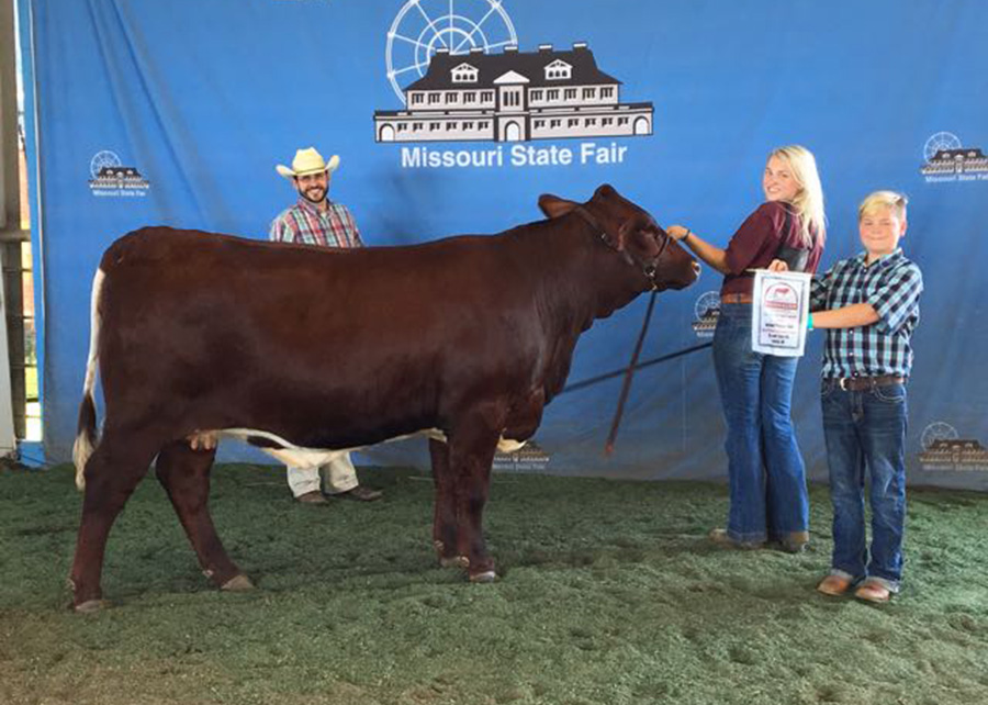 National-Champion-Crossbred-Female-2017-National-Pinzgauer-Show-Shelby-Ferguson