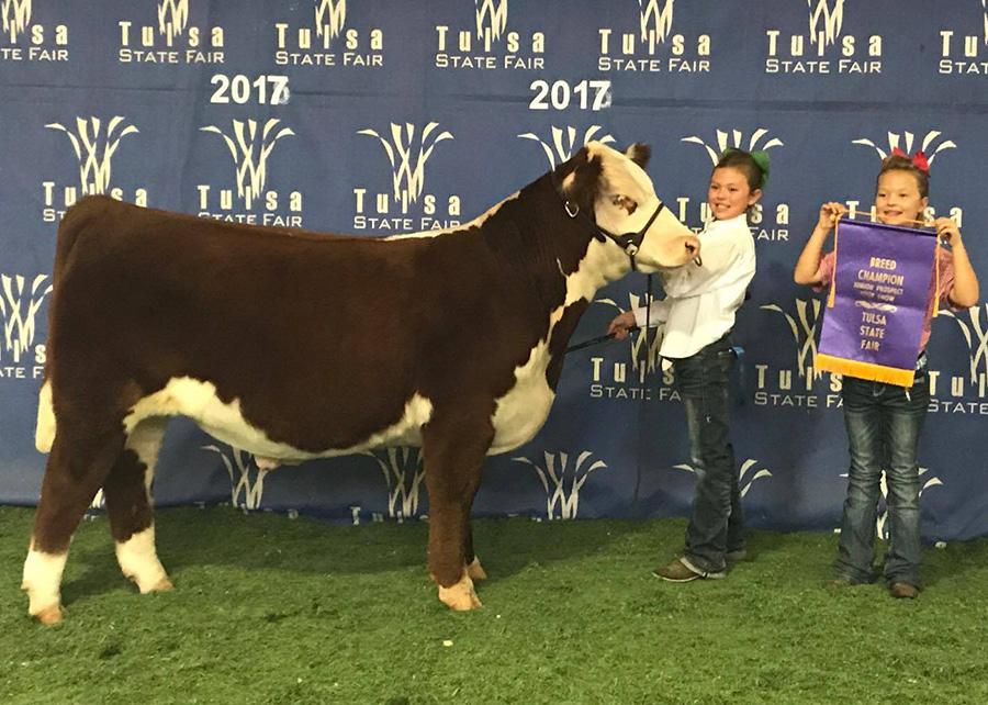 17—-Carrington-Troyer-Breed-Champion-Hereford-Prospect-Steer-Tulsa-State-Fair-Adair,ok