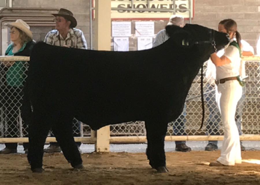 17-GC-Mkt-Steer-San-Benito-County-Fair-Taryn-Wright