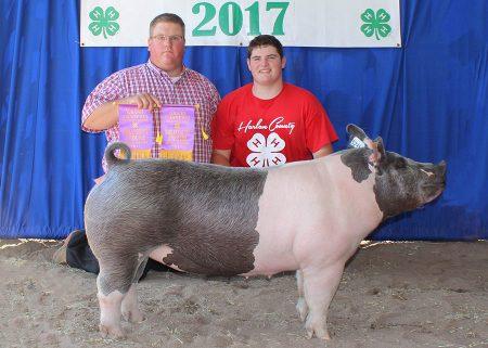 Grand Champion Mkt Gilt2017 Harlan County FairShown by Sheldon Johnsen