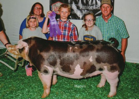 Champion Spot Gilt2017 National Barrow ShowShown by Anthony Schneidet