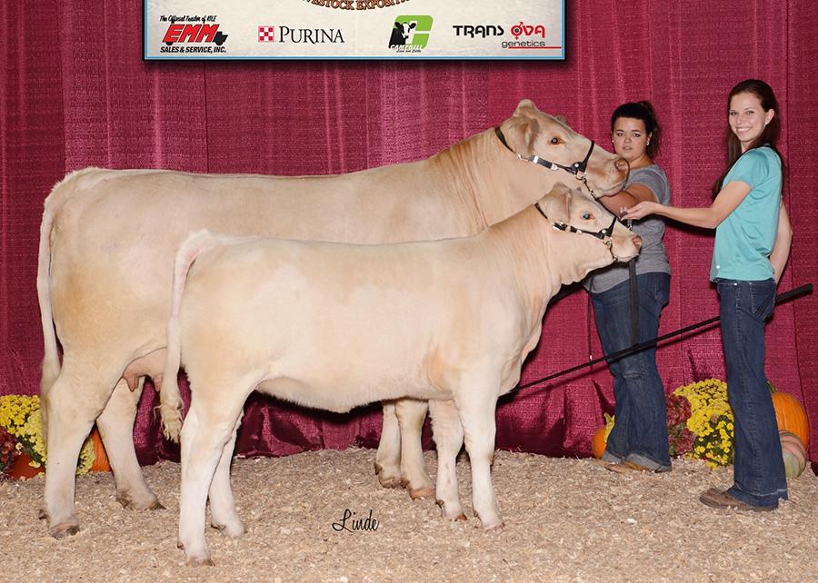 17-grand-champion-charolais-cow-calf-pair-keystone-international-livestock-expo-kaitlin-smith