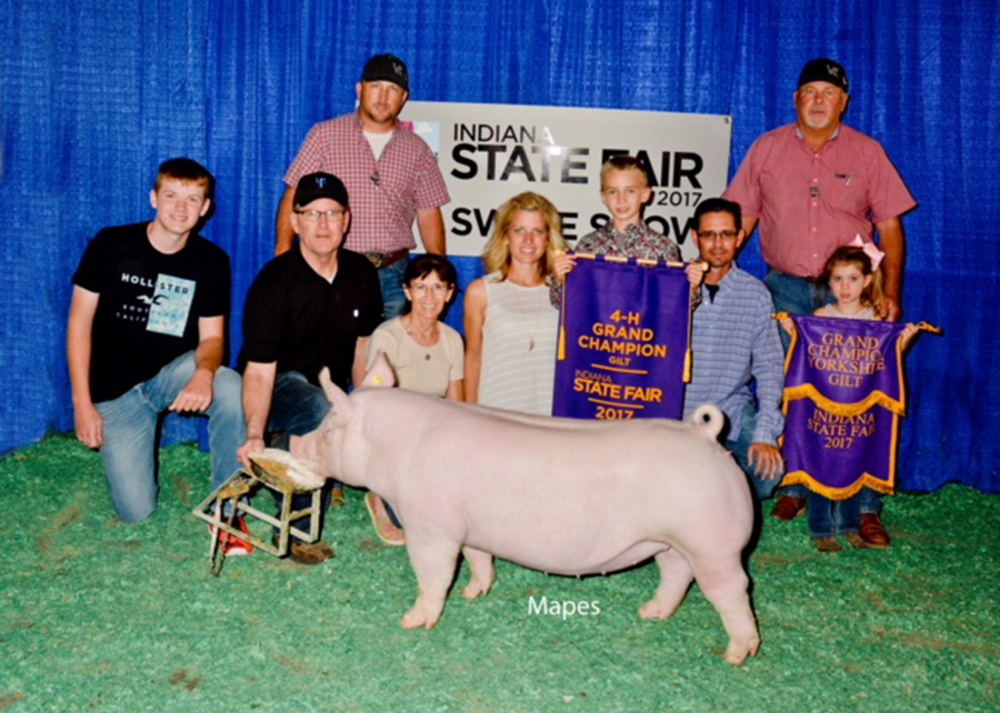 17-grand-champion-gilt-indiana-state-fair-gavin-sinclair