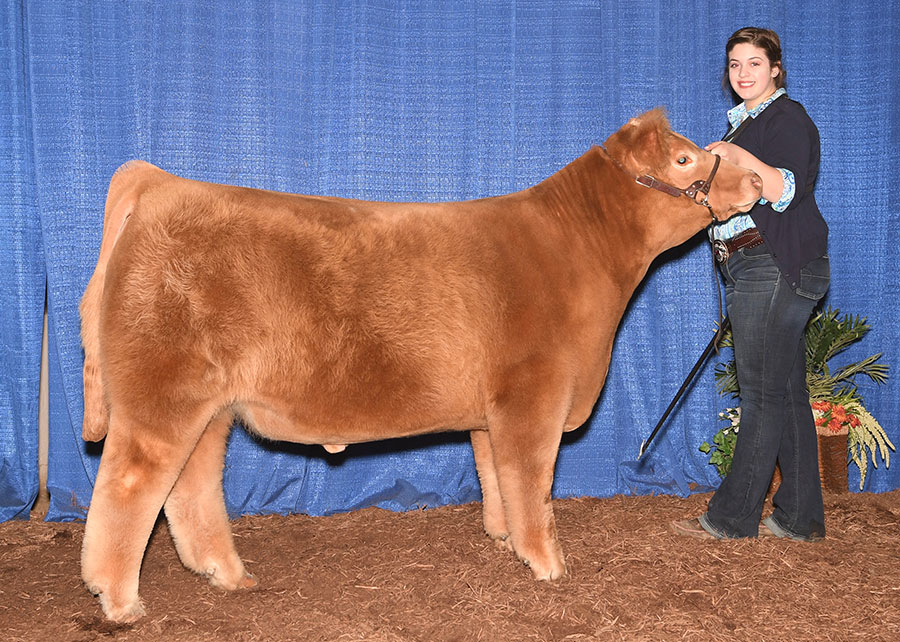 17-grand-champion-aob-steer-heart-of-it-all-maggie-matthews