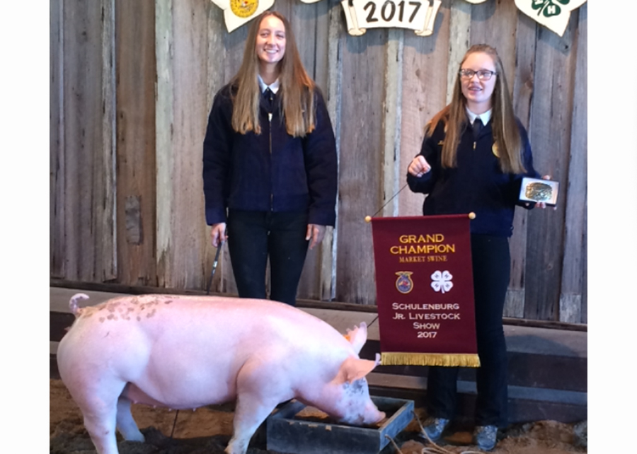 17 Schulenburg Jr Livestock Show, Grand Champ, Shown by Bailey Rolirad Champ