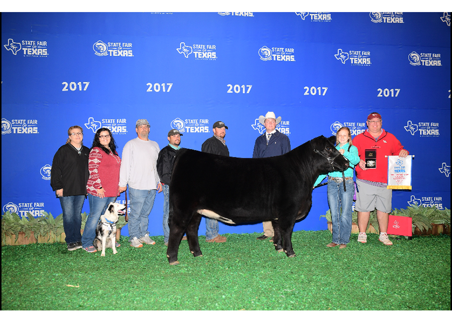 17 State Fair of Texas, Grand Champion Chianina Heifer, Shown by Jennifer Stephenson Champ