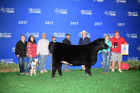 17 State Fair of Texas, Grand Champion Chianina Heifer, Shown by Jennifer Stephenson Test