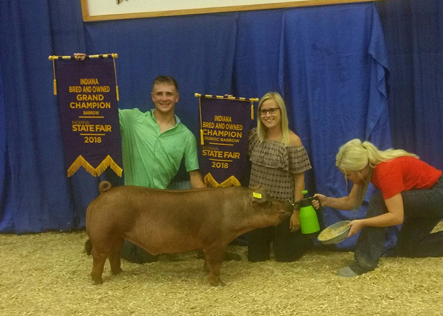 18 Indiana State Fair, Overall Grand Champion Indiana Bred & Owned Barrow, Indiana Bred & Owned Champion Duroc Barrow, shown by Peyton Winninger Champ