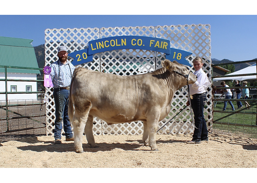18 Lincoln Co Fair, Grand Champion, Shown by Cashlee Hepworth Champ