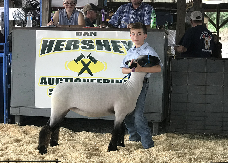 18 Shippensburg Fair, Reserve Champion Light Heavyweight, Shown by Colt Clelan Champ
