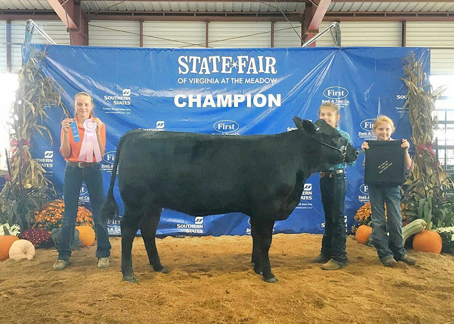 18 Virginia State Fair, Grand Champion, Shown by Taylor Kennedy Champ
