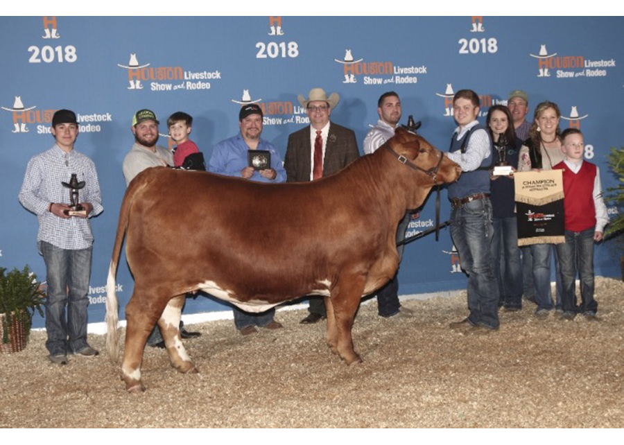 2018 Houston Livestock Show and Rodeo, Grand Champion, Shown by Shawn Skagg Champ