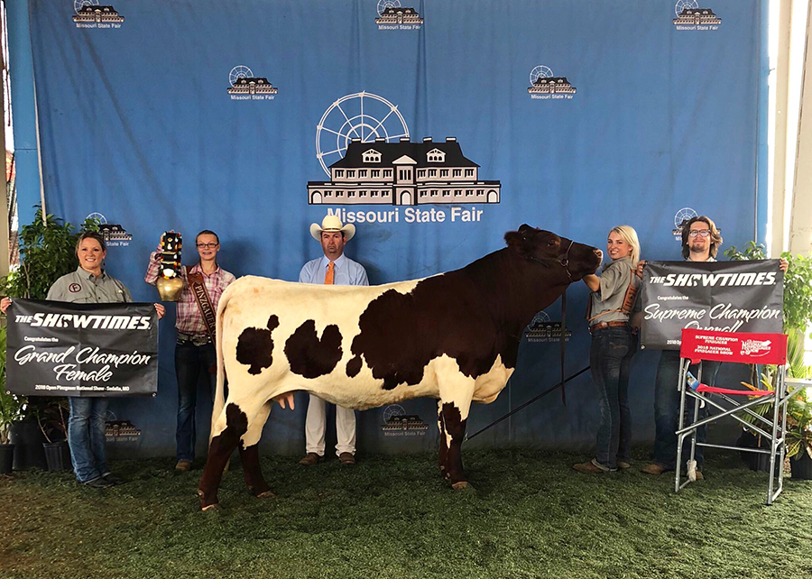 18 National Open Pinzgauer Show, Supreme Champion Pinzgauer, National Champion Female, Shown by Shelby Ferguson Champ