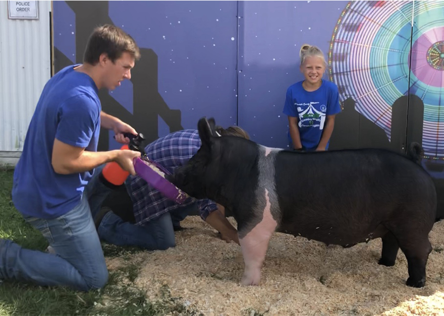 18 Walworth Co. Fair, Grand Champion, Shown by Addy Popp Champ