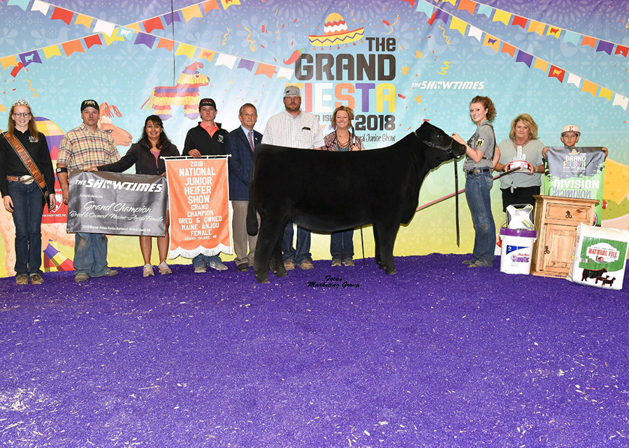 18 Maine-Anjou Junior National, Grand Champion Bred & Owned Maine-Anjou Female, Shown by Taylor Dorsey