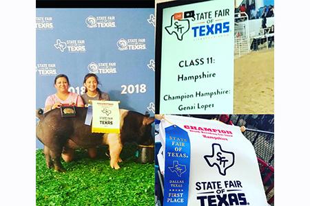 18 State Fair Of Texas, Grand Champion Hampshire Breeding Gilt, Shown by Genai Lopez Test