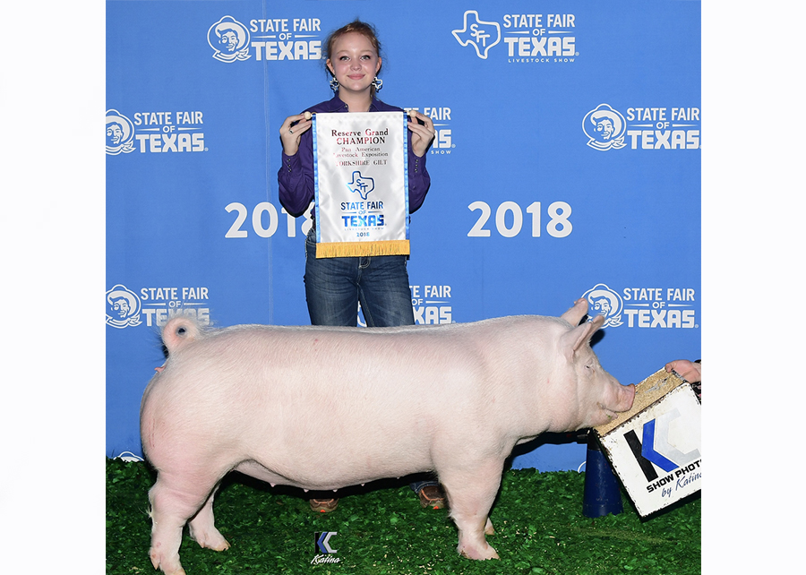 18 State Fair of Texas Pan American, Reserve Champion York Gilt, Shown by Cyerra Lackey Champ