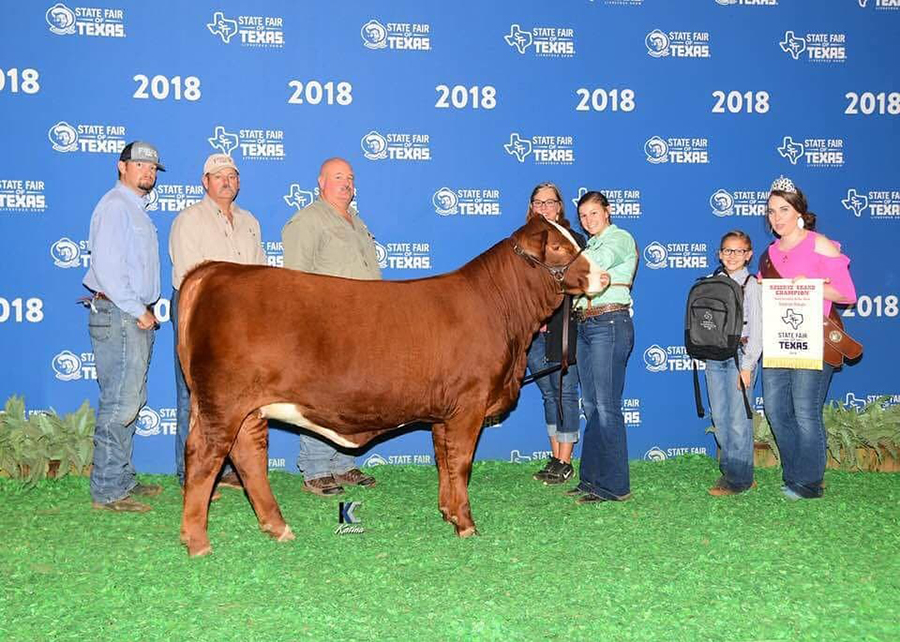 18 State Fair of Texas, Reserve Grand Champion Simbrah, Shown by MacKenzie Groce Champ