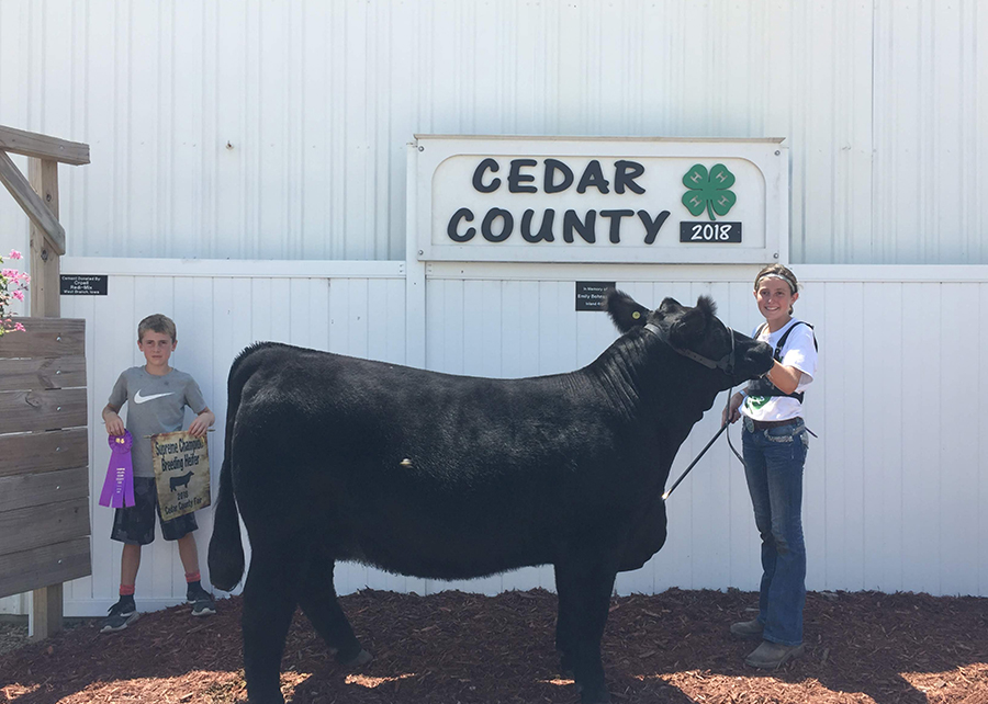 18 Cedar County Fair, Grand Champion Breading Heifer, Shown by Cadence Hansen
