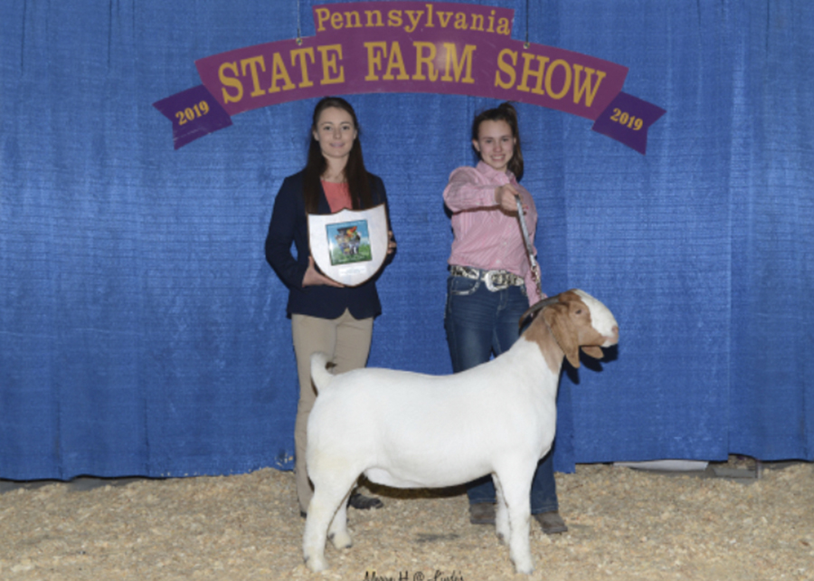 19 PA Farm Show, Grand Champion Percentage Doe, Shown by Kylie Brown Champ