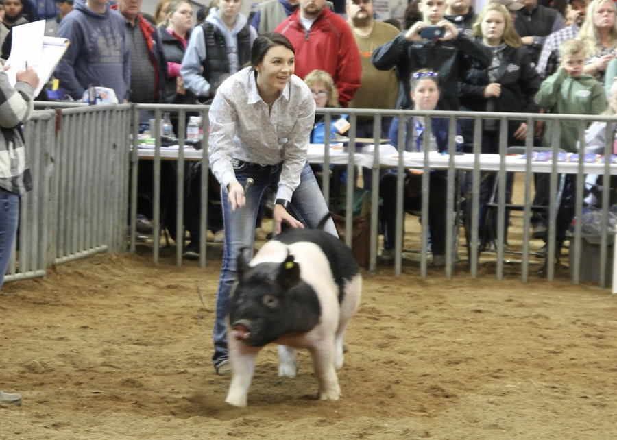 19 Pa State Fair, Light Weight Division Reserve Champion, shown by Madison Schultheis Champ
