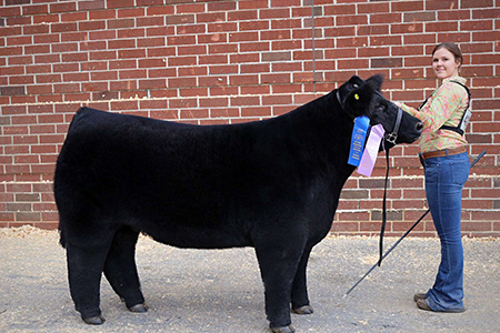 18 Keystone International Livestock Exposition, Reserve Middle Weight market steer, Shown by Alli Jobe Test