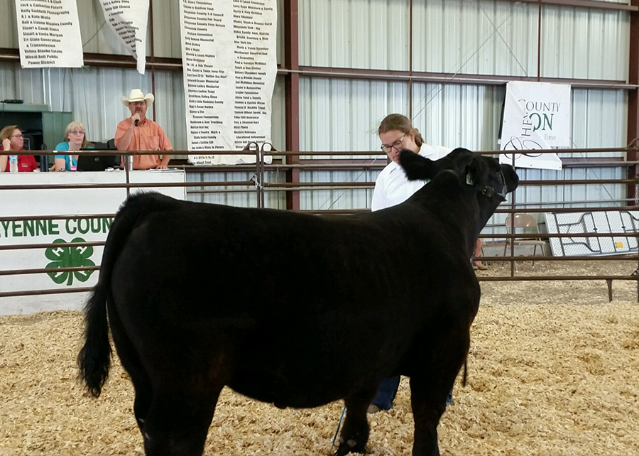 18 Chyenne County Fair and Rodeo, Reserve Grand Champion Market Steer, Shown by Emily Miller champ