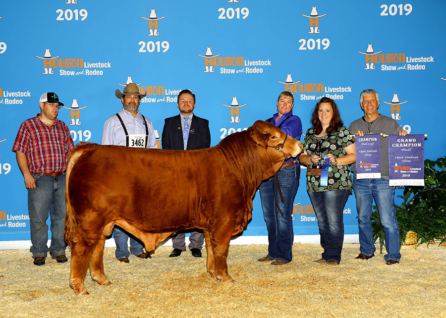 19 Houston Livestock Show, Champion Simbrah Bull, Shown by Pool Farms champ